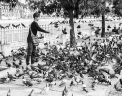 birdman (cih94) Tags: burma burmese mynamar mandalay city birds doves man feeding many movement black white asia