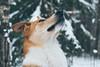 A walk in the winter wonderland. (PeeterTomson) Tags: dogs portrait winter snow estonia forest bog fujifilm olympus 50mm green white nature travel explore enjoy weekend