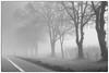 Foggy drive 4 (Jerzy Durczak) Tags: fog road driving trees
