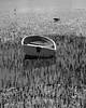 Yattalunga foreshore_1396mc (gtveloce) Tags: centralcoast australia walk yattalunga nsw foreshore boats trees brisbanewater monochrome