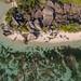 Beach Anse Source d'Argent aerial La Digue Seychelles