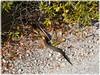Weedon Island Preserve - St Petersburg, Florida (lagergrenjan) Tags: weedon island preserve st petersburg florida snake water moccasin