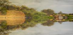 Murray River, SA (el-liza) Tags: nature outdoor outside river plant trees boat water reflections murray adelaide sa australia