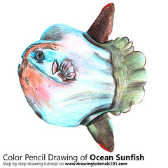 Ocean Sunfish with Color Pencils [Time Lapse] (drawingtutorials101.com) Tags: ocean sunfish mola fish fishes animal animals sketching sketch sketches draw drawing drawings color colors coloring pencil how timelapse video speed