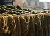 Drying green wool. (Shahrazad26) Tags: wool wol groen green vert grün marrakech marokko morocco maroc