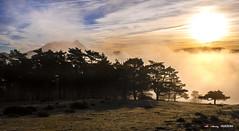 Amanecer en Saibi con sol y niebla (Jabi Artaraz) Tags: jabiartaraz jartaraz zb euskoflickr saibi urkiola parque natural de pinos sombras niebla sun sol nature