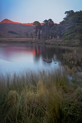 Llyn Y Gader 01 25.2.2018 (Ken Bland) Tags: llynygader snowdonia northwales wales reflections reeds mountains trees lake sunset colour lanscape nikon d7100 nikond7100