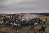 Kopkari; Jomboy, Uzbekistan (erik-peterson) Tags: 2017 adventure buzkashi d3s erikpeterson goat goatpolo horse horses kopkari mud october tashkent ulak uzbekistan узбекистан