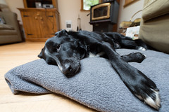 Dog tired (D. Inscho) Tags: ucluelet fortunecove cabin vancouverisland canada bc pacificnorthwest zeiss15mmdistagon