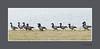 ROTGANS - [Branta bernicla] (FotoRoelie.nl) Tags: watervogels rotgans branta bernicla ganzen