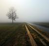 Foggy sunday (Robyn Hooz (away)) Tags: sunday albero codiverno canali campi fields campagna lines linee grandangolo uwa lens veneto nebbia