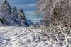 Mt Granier depuis Curienne - Savoie (gerardcarron) Tags: 18135 arbres calme canon80d ciel curienne cloud hiver landscape matin montagne morning mountains nature neige nuages paysage savoie sky snow soleil sun winter