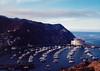 on high (rockpowered) Tags: catalina island analog film scanner california pentacon six biometar 80mm ektar