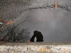 Rainwater & Self (Stephenie DeKouadio) Tags: canon photography outdoor art artwork shadow shadows rain winter washington washingtondc dc dcphotos dcurban urban urbandc portrait selfportrait