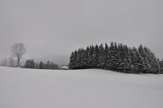 anywhere I roam (Uli He - Fotofee) Tags: ulrike ulrikehe uli ulihe ulrikehergert hergert nikon nikond90 fotofee eis schnee winter februar winterlandschaft winterwald winterbäume reif rauhreif gersfeld wasserkuppe eube wachtküppel guckaisee