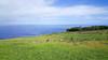 20171207_110849 (taver) Tags: chile rapanui easterisland isladepasqua summer samsunggalaxys6 dec2017 07122017 orongo