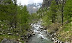 Into the Wild (W@nderluster) Tags: nationalpark granparadiso piemonte adventure italy trees mountains