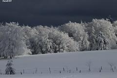 L'hiver sur les monts de la Madeleine / Fence in Roannais HFF (BPBP42) Tags: neige snow frost nature fence arbre tree hiver paysage landscape landschaft