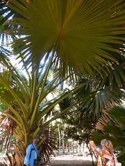 Botanic Gdns Mauritius
