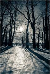 Winter im Venn (juergen.becker) Tags: baraquemichel hohesvenn nationalparkeifel belgien eifel winter schnee