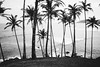 Location spotting (tropeone) Tags: mirissa palm tree indian ocean shore beach blackwhite tropeone