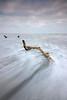 Serpentine (Sarah_Brooks) Tags: driftwood seascape serpentine wood sea ocean dorset lymeregis morning jan winter swooshery