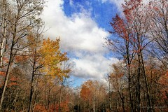 Penn Forest (socalgal_64) Tags: carolynlandi pennsylvania pennforest forest township nature woods natural outdoors treeline scenic pictureque colorful autumn fall clouds pennforesttownship pennforestpa picturesque landscape usa