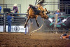 Devil Eyes (New Deal Lions Sports and then some) Tags: winner rodeo livestock horse cowboy up
