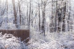 20180118 (Homemade) Tags: snow woods fence trees forest northsalem nikon2470mmf28 nikkor2470mmf28 westchestercounty ny newyork dingleridgeroad