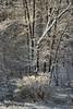 Lumière dans le boisé... / Winter light in the woodland... (Pentax_clic) Tags: pentax kr imgp3697 février 2018 robert warren vaudreuil quebec hiver neige boisé