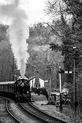 Churnet Valley #67 (scilly puffin) Tags: churnetvalleyrailway cvr s160 tankengine 4277 5146 6046