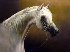 Equine-paintings (judi.kent.pyrah) Tags: arabian horse arab horses paintings equestrian art equine pictures