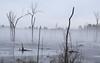 Wetland on a Foggy Morning (RockN) Tags: fog february2018 wetland littleton massachusetts newengland