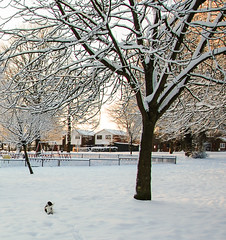 Jack Russel and snow Parkwood Green (philbarnes4) Tags: parkwoodgreen dslr philbarnes rainham gillingham nikond80 winter jackrussell dog