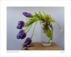 tulips (ekkiPics) Tags: flowers tulips lilac violet studio decay nature stilllife