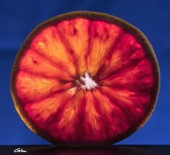 Citrus (giloudim) Tags: macromondays citrus macro agrume orange intérieur canon7dmarkii tamrom fruit bleu studio