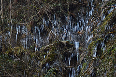 Icicles at Henrhyd Falls (cmw_1965) Tags: dol henrhyd neath winter wintry coelbren brecon beacons national park powys wales cymru welsh frozen waterfall icicles sgwd nant llech abercrave 17°c beast east 2018