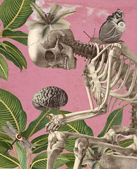 hannibal's delight (yumikrum) Tags: yumikrum collage surrealism skeleton bones cannibal garden nature hannibal art mortal immortal life age beauty health youth medicine body psychology artificial intelligence robot android ai simulation imagination creative network human thought mind