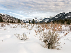 sage and tetons in canyon (maryannenelson) Tags: wyoming tetoncanyon landscape snow winter tree mountain sky sage