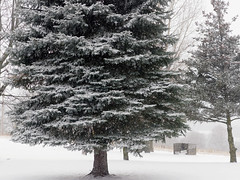 snow day (1) (Ange 29) Tags: snow trees olympus omd em1 mkii 35100mm zd king township canada