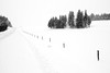 On the road (Nicole Barge) Tags: snow landscape winter winterscene road route country campagne 2018 noiretblanc blackandwhite monochrome