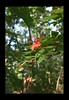 Duke Gardens July 2015 9.07.21 PM (LaPajamas) Tags: nc flora dukegardens gardens