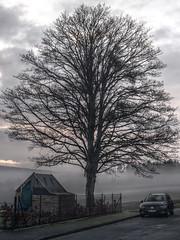 Nebel - HDR (jens.steinbeisser) Tags: deutschland osterodeamharz hdr olympusepl3 luminancehdr niedersachsen baum canonfd50mm14 focalreducer