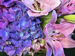 Hydrangea and Lilies Painting (Linda Cochran) Tags: hydrangea lily blue pink flowers procreate photopainting digitalpainting dgitalart iphone