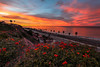 Palisades Gazebo View (sosidesc) Tags: capo sunrise capistranobeach capobeach gazeboview california