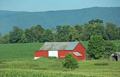 Red Barn Of Course (craigsanders429) Tags: virginia redbarn barn farm mountains blueridgemountains traveling trees
