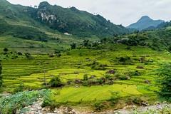 Úrodné lůno hor (zcesty) Tags: řeka vietnam23 terasa rýže pole krajina hory vietnam dosvěta hàgiang vn