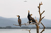 overlooking the lake (dim.pagiantzas | photography) Tags: lake landscape mountains trees water waterscape nature branches textures birds colors bokeh foggy animals wildlife telephoto field sky furs wood bird animal