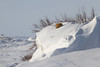 Sleep on a cold February day (alexander.alechits) Tags: sakhalin sakhalinisland snow winter fox redfox slope okha moskalvo ©alexanderalechits canoneos7d canonef70300mmf456lisusm сахалин оха москальво зима лиса лисица