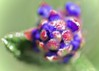 Kiareimaginations   50 (kiareimages1) Tags: macro macroflowers macrophotographie macrophoto abstract abstrait artistic colors imagery images immagini